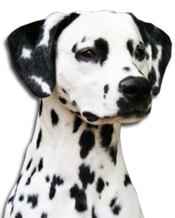 LUA Dalmatians World
